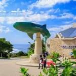 【子連れで楽しむ!】沖縄観光で子供が喜ぶおすすめスポットはここ!